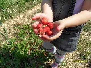 Auf dem Erdbeerfeld