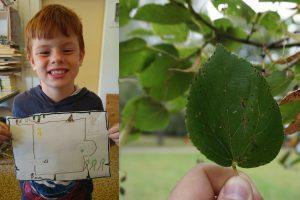 Links: Ein Wunderfinder zeigt seine Schatzkerte - Rechts: Ein Lindenblatt