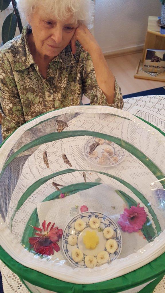 Dame beobachtet Schmetterlinge in der Voliere