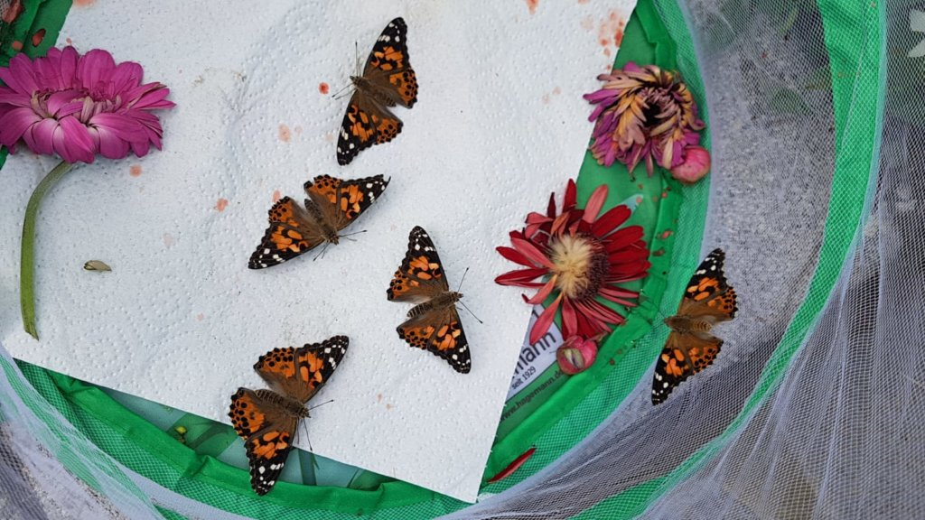 Schmetterlinge in geöffneter Voliere