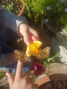 Schmetterlingsflug bei Familie Erler