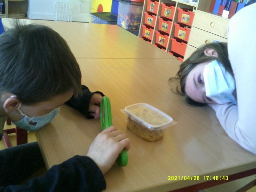 Kinder beobachten Raupen