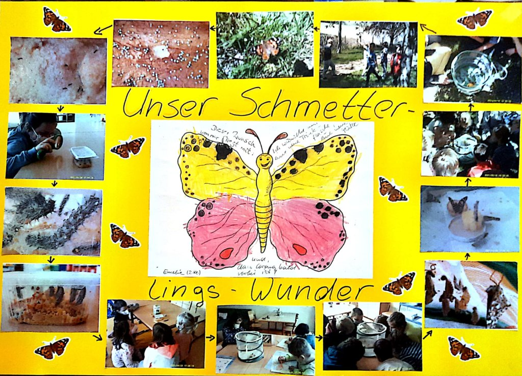 Plakat-Schmetterlinge