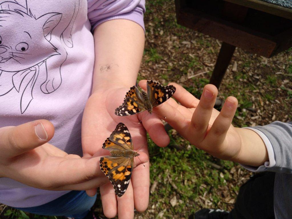 Schmetterlinge auf Kinderhänden